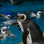 free entry to shedd aquarium with chicago citypass