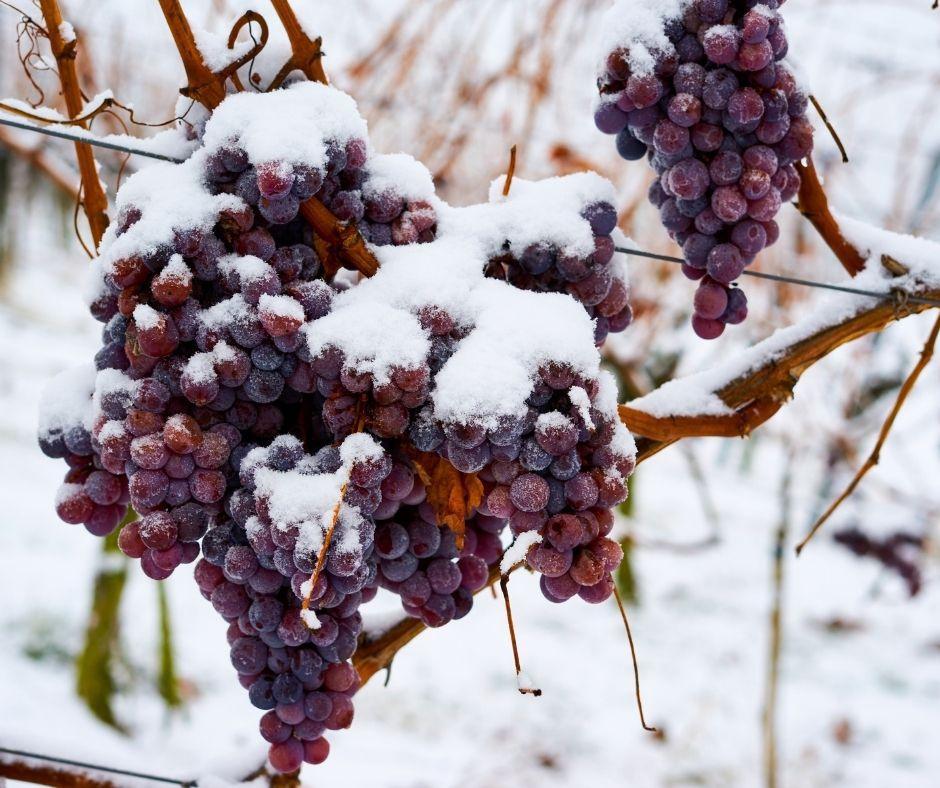 best canadian foods - ice wine