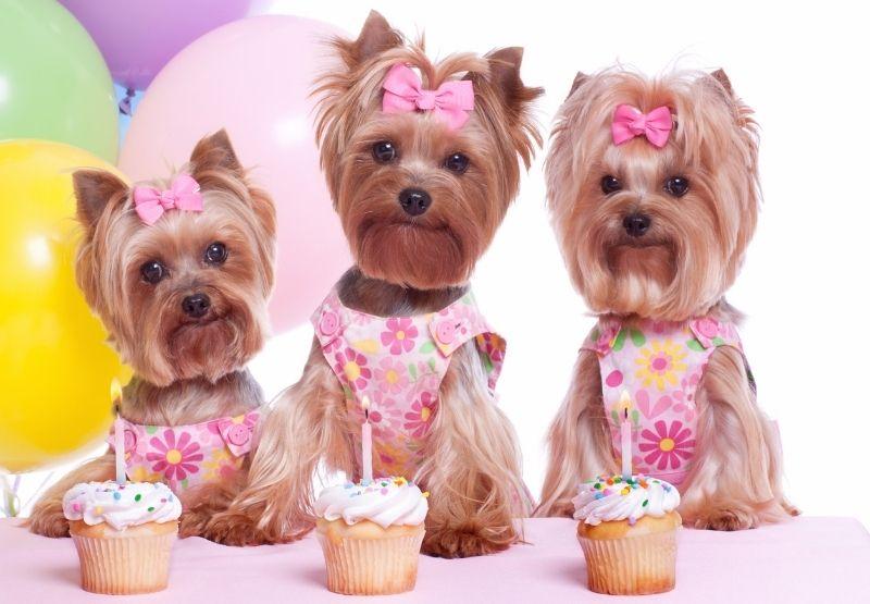 make $500 a month selling dog treats