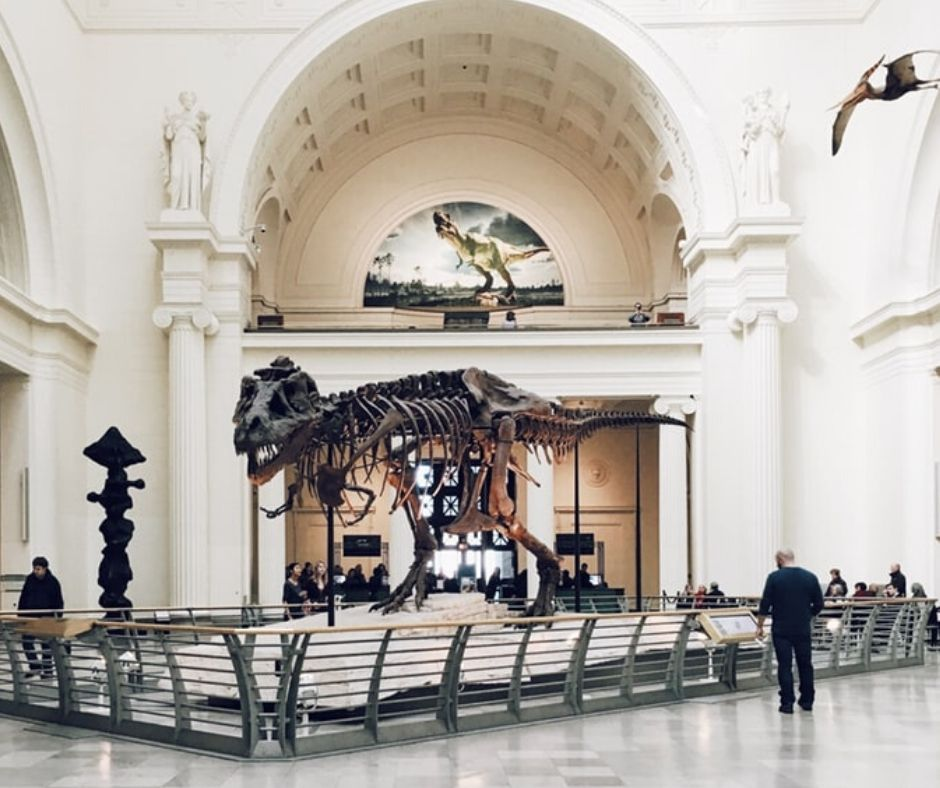 free entry to the field museum with the chicago citypass